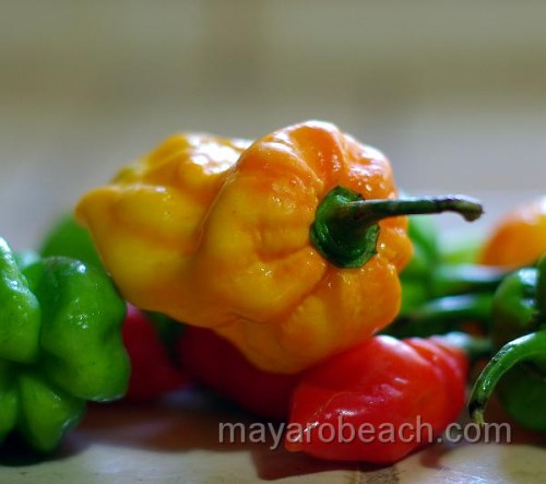 rellow-hot-pepper-aka