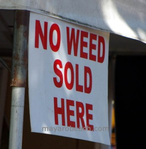 no weed-mayarobeach.com